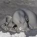 The newer mud pots / mud volcanoes at the Salton Sea