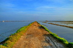 Valencia, Albufera Road over Rice Fields (gerard eder) Tags: world travel espaa lake valencia reflections lago see nationalpark spain europa europe outdoor landwirtschaft viajes agriculture ricefields spanien reise albufera agricultura arrozales albuferalake