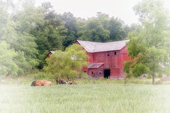 The Red Barn (Denise @ New Mercies I See) Tags: 2016 july summer ohio country countryside amishcountry outdoors barn old farm red holmescounty onethousandgifts rural ruralohio