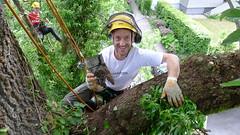 left-behind (arborist.ch) Tags: tree baum treehugger treeclimbing arborist treecare baumpflege arboriculture