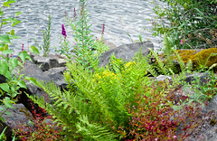 Riverbank Foliage (Orbmiser) Tags: flowers plants oregon portland nikon boulders riverbank willametteriver summmer d90 55200vr