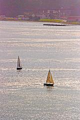 DSC_6631 - Copy (digifotovet) Tags: sanfrancisco california bay boat sail