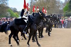 England 2016  London  Getting the horses in line (Michiel2005) Tags: uk greatbritain england horse london soldier unitedkingdom britain guard soldiers engeland soldaten changingoftheguard londen paard horseguards soldaat vk grootbrittanni verenigdkoninkrijk