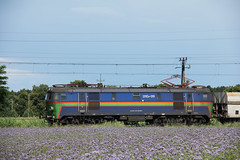 PMT 201Eo-010 , Wrocaw 18.06.2016 (szogun000) Tags: railroad electric train canon tren engine poland polska rail railway cargo locomotive coal trem treno freight e30 locomotora lokomotive wrocaw pkp mainline locomotiva pocig pmt   lokomotywa elektrowz lowersilesia dolnolskie dolnylsk towarowy et22 polmiedtrans canoneos550d canonefs18135mmf3556is phulokomotiv d29275 201eo 201eo010