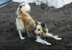 Tota mi mascota. (jagar41_ Juan Antonio) Tags: animal perro perros animales mascota mascotas
