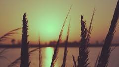 Sunset (artman51164) Tags: ocean sunset nature vintage landscape sonya6000