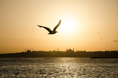 dance dance dance (erdalisikak) Tags: blue sunset sea orange black silhouette turkey dark nikon seagull istanbul silence sophia bosphorus hagia 18105 ayasofya d700 nikoneurope istanbulfreephotography