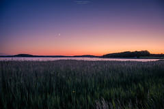 Night Glow (Fredrik Lindedal) Tags: moon light lindedal sky sweden sverige skyline serene bluehour fields depthoffield colors blue orange red reed coast ocean onewithnature nikon nature field landscape flower