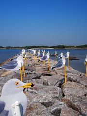 """かもめの駐車場 (""""KIUKO"""") Tags: seagull gull nishio 愛知 aichi かもめ sakushima カモメ 鴎 西尾 鷗 佐久島 olympusmzuikodigital17mmf18"""