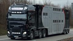 D - Pieter C. Maat DAF XF 106.510 SSC (BonsaiTruck) Tags: truck 106 lorry camion trucks livestock pieter lastwagen daf lorries lkw xf maat lastzug