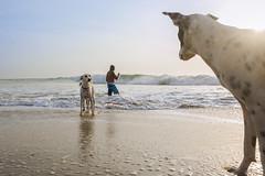 Kovalam, Chennai (Robinraj.M) Tags: sea india beach dogs robin nikon marine ngc chennai seashore tamilnadu southindia kovalam cwc icapture robinraj chennaiweekendclicker nikond7100 robinrajm robinclicks robinsclick robinclick robinsclicks cwc541