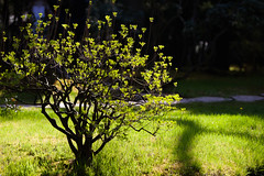 clingendael-7724 (Arie van Tilborg) Tags: japanesegarden hague thehague clingendael japansetuin clingendaelestate landgoedclingendael arievantilborg