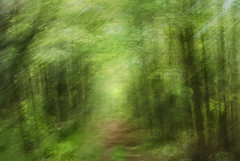 DSC_0980 (lioncourt7) Tags: longexposure trees light sunlight lightpainting green forest movement cameratoss lightplay experimentalphotography intentionalcameramovement