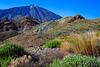 _FGG8833 (fernando_garcía) Tags: stroglofilms fernandogarcia tenerife canarias teide parquenacional tajinastes flora paisajes flores