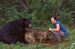 Myself With Large Male Black Bear. (AlaskaFreezeFrame) Tags: bear wild animals alaska canon blackbear