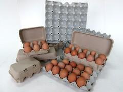 แผงไข่กระดาษ ถาดไข่กระดาษ pulp mold eggtray-12