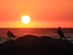 Sunset over Pacific Ocean (Fabro - Max) Tags: ocean chile sunset sun bird oceano laserena oceanopacífico