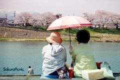 Shiroishi, Japan 2013 (waniktab) Tags: flower japan  sakura sendai miyagi   fullbloom shiroishi  waniktab