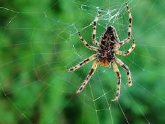 f.r.η αράχνη και το εργόχειρο...