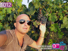 Foto in Pegno n1012 (Luca Abete ONEphotoONEday) Tags: selfportrait nature sunglasses project vineyard luca vines campania foto wine 7 grapes uva abete settembre vite 1012 autoscatto pigna wines wineries vigna 2013 onephotooneday striscialanotizia pegno inviato unafotoalgiorno nikonj1 unafotoinpegnonikon winemakersandvineyard