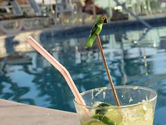 Caipirinha + Piscina (alnero) Tags: hot ice gelo canon lemon dof drink piscina sugar swimmingpool caipirinha pinga papagaio calor cachaa limo acar sx40hs