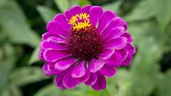 Flor en Central Park