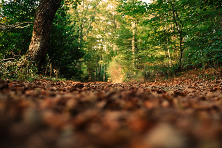 Il respiro del bosco