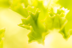 Verde (Nesta Vazquez) Tags: flores verde hoja plantas cristina flor huelva rosa playa isla petalo antilla islantilla islacristina urbasur