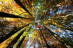 In the heart of the forest (annalisabianchetti) Tags: autumn trees alberi forest autunno foresta