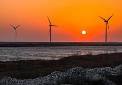 (Digital_trance) Tags:     oyster  seafood ship   ocea sea  sunset sunrise    taiwan  lanscape  nature  windmill   bird bif  canon sigma 5d2 5dii 5dmarkii canon5dmarkii canon40d 40d eos5dmarkii canon5d2 canon70d 70d canon5dmarkiii 5d3 5diii 20d