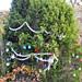 Trees_of_Loop_360_2013_057