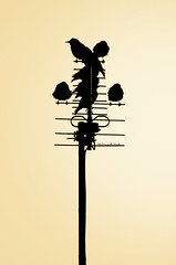 Al tramonto (Marcello Pirola) Tags: winter sunset sun bird birds tv uccelli antenna pidgeon uccello televisione piccioni