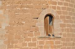 Coloms prenent el sol a una finestra del Castell de Bellver (Rafel Miro) Tags: castle window ventana pigeon pigeons paloma finestra palomas mallorca palma castillo majorca castell colom castelldebellver bellvercastle coloms castillodebellver