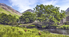 Three chickens and a bridge (Katybun of Beverley) Tags: bridge trees landscape cumbria wasdalehead gosforth