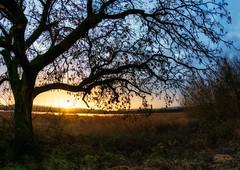 Attenborough Sunrise - [Explored] Thanks! (rkphotographer) Tags: panorama tree silhouette sunrise lens nikon flare d600 attenboroughnaturereserve 1635mm beacheslandscapes