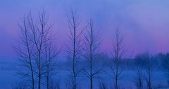 Morning Glory (Alan Szalwinski) Tags: trees winter mist lake sunrise colorado frost dreamlike beautifulclouds chatfieldstatepark frozentrees canon7d