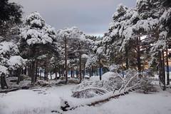 RQUIEM (Susana M.L.) Tags: espaa naturaleza snow spain day nieve paisaje rbol cceres extremadura paisajenevado piornal canoneos550d elpiornal pwwinter vision:mountain=0649 vision:outdoor=0987 vision:street=0549 vision:sky=0599 vision:snow=0763