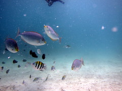 IMG_9111 (milewski) Tags: ocean fish water underwater salt scuba diving tropical scubadiving saltwater tropicalfish underwaterphotography oceanphotography