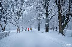 White Background (PixelRange) Tags: winter snow snowstorm woodenbridge winterstorm noreaster millgrove nikon1224mm noreasterstorm nikond7000 winter2014 audubonlooptrail millgrovewildsanctuary millgrovebirdsanctuary millgrovesanctuary