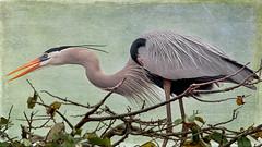 In the brush (benshell) Tags: bird florida textures wakodahatcheewetlands top20birdshots pixeldust vigilantphotographersunite vpu2 3lilowls