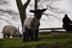 Calder Vale Lamb (jacktoner) Tags: reflection church water field river memorial walk lancashire vale calder lamb wyre waterdroplet wier caldervale watermist