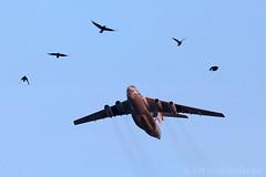 Lets work together! IL-76 & birds (Artyom Anikeev) Tags: plane airplane aviation cargo spotting avia planespotting il76 ilyushin zhukovskiy uubw