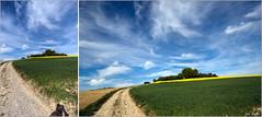 17 04 2014 (Jean G68) Tags: campagne printemps chemin champ k3 colza aspach pentax1650