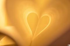 Heart / Corazón (Juli Bormida) Tags: book heart pages libro corazón páginas