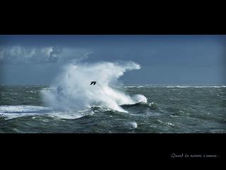 Quand la nature s'amuse! (Lomener nov 2013) - ©aMaPteur