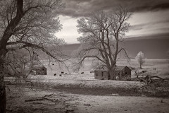 . . . . the cows come home. (scott branine) Tags: white black digital pentax ds lucas hills infrared kansas smoky ist