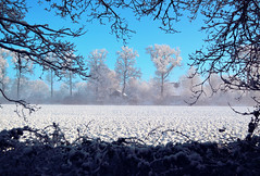 Winter view (RolandHut) Tags: road blue trees winter white snow holland ice nature netherlands field forest seasonal thenetherlands wintersday