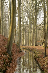 Leyduin 15-02-'15 (Thanks for reaching 200.000 views!) Tags: trees winter holland reflection tree nature netherlands canon bomen natur nederland natuur sunny boom nl february ef50mmf18ii weerspiegeling leyduin vinkenduin canon60d oudwoestduin