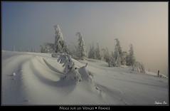 Neige sur les Vosges (HimalAnda) Tags: winter mountain snow france montagne hiver alsace neige vosges sapin eos400d canoneos400d stéphanebon