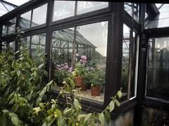 Glasgow Botanic Gardens - 1980s - 2 (the justified sinner) Tags: macro film gardens 35mm 1 md minolta glasgow slide scan panasonic scanned botanic 50 35 copier kibblepalace rokkor gh2 autobellows justifiedsinner